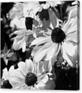 Black And White Coneflowers Canvas Print