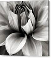 Black And White Dahlia Canvas Print
