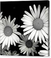 Black And White Daisy 2 Canvas Print