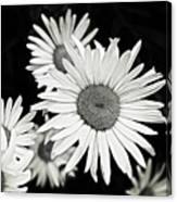 Black And White Daisy 3 Canvas Print