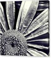 Black And White Daisy  Canvas Print