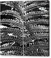 Black And White Fern Canvas Print