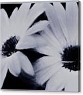 Black And White Floral Art Canvas Print