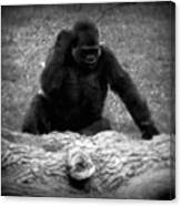 Black And White Gorilla Canvas Print