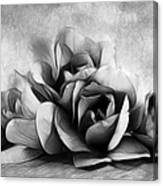 Black And White Is Beautiful Canvas Print