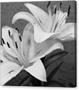 Black And White Lilies 1 Canvas Print