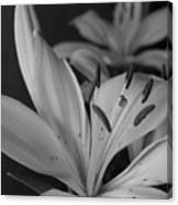 Black And White Lilies 2 Canvas Print