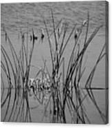 Black And White Marsh Design Canvas Print