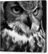 Black And White Owl Painting Canvas Print