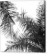 Black And White Palm Trees Canvas Print