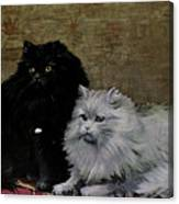 Black And White Persians Canvas Print