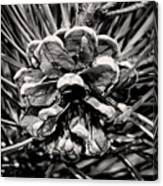 Black And White Pine Cone Wall Art Canvas Print