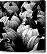 Black And White Pumpkins Canvas Print
