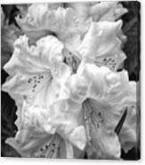 Black And White Rhododendron Canvas Print