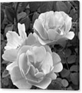 Black And White Roses 1 Canvas Print