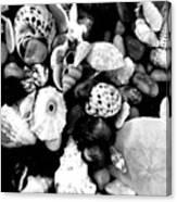 Black And White Seashells Canvas Print