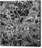 Black And White Sun Flowers  Canvas Print