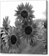 Black And White Sunflowers Canvas Print
