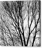 Black And White Tree Branches Silhouette Canvas Print