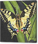 Black And Yellow Butterfly Canvas Print