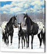 Black Appaloosa Horses In Winter Pasture Canvas Print