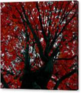 Black Bark Red Tree Canvas Print
