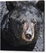 Black Bear 1 Canvas Print
