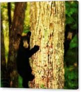 Black Bear Cubs Canvas Print