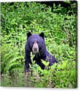Black Bear Eating His Veggies Canvas Print