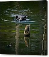 Black Bear Pictures 104 Canvas Print