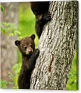 Black Bear Pictures 84 Canvas Print