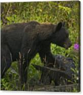 Black Bear-signed-#6549 Canvas Print