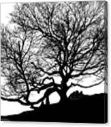 Black Birch Silhouette 2009 07 Canvas Print