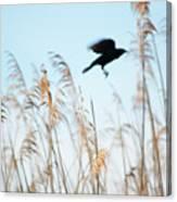 Black Bird In Cat Tails Canvas Print