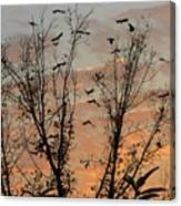 Black Birds At Sundown Canvas Print