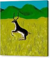 Black Buck Canvas Print