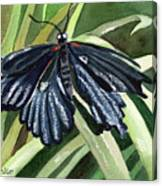 Black Butterfly Canvas Print