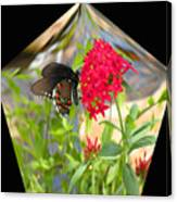 Black Butterfly In A Diamond Canvas Print
