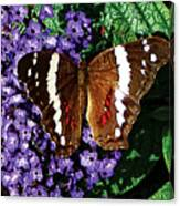Black Butterfly On Heliotrope Canvas Print