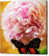 Black Butterfly On Peony Canvas Print