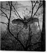 Black Buzzard 3 Canvas Print
