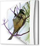 Black-capped Chick-a-dee Canvas Print