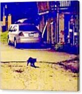 Black Cat Crosses Path Canvas Print