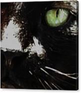 'black Cat' Canvas Print