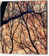 Black Cotton Canvas Print