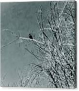 Black Crow White Snow Canvas Print