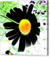 Black Daisy Canvas Print