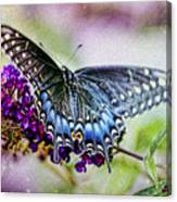 Black Eastern Swallowtail Canvas Print