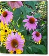 Black Eye Susans And Echinacea Canvas Print