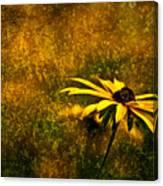 Black-eyed Susan And Granite Canvas Print